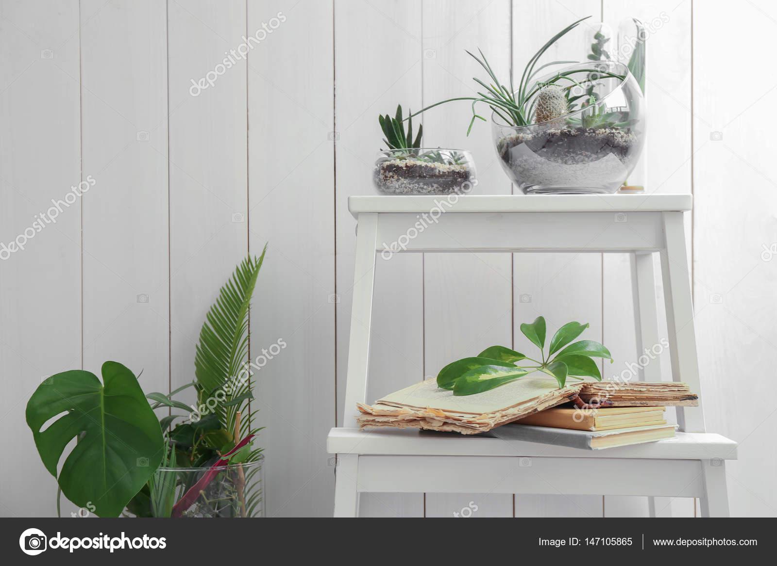 Florarium con piante grasse e cactus u foto stock belchonock