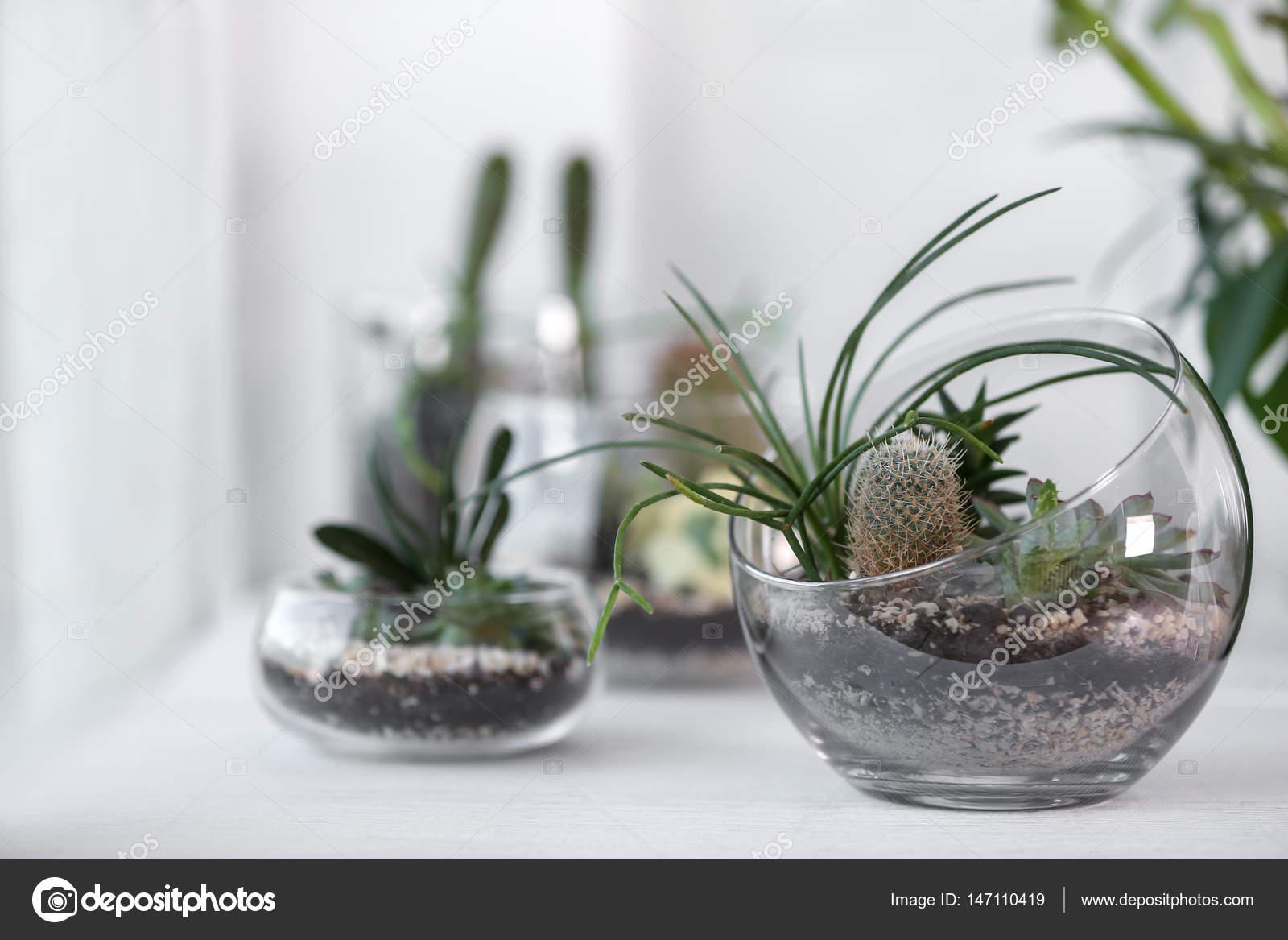 Mini Jardin Succulente Dans Le Terrarium En Verre Photographie
