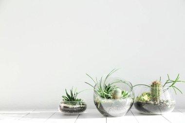 Succulent gardens in glass vases