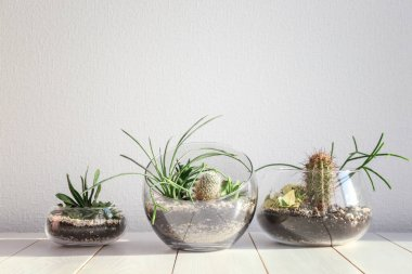 Succulent gardens in glass vases