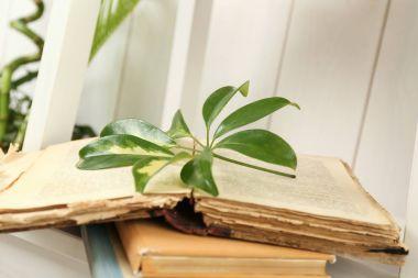 Book with scheffler leaf