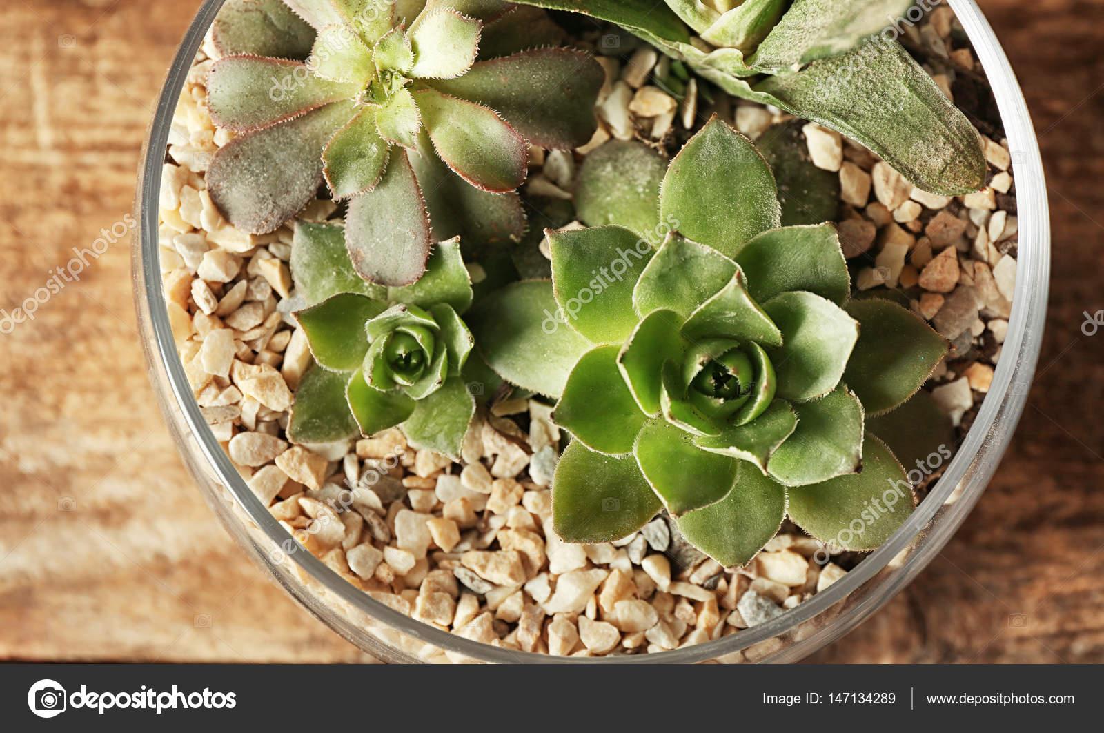 Composizione Piante Grasse In Vaso Di Vetro.Composizione Di Piante Grasse In Vaso Di Vetro Foto Stock