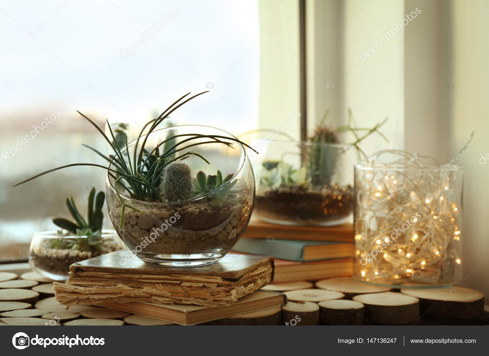 Mini succulent garden in glass terrarium — Stock Photo © belchonock ...