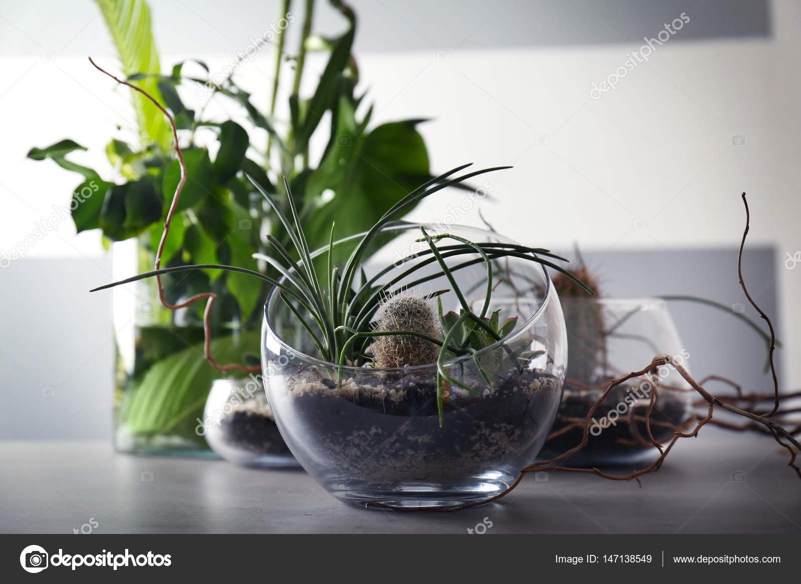 Piante Grasse In Vetro.Florarium In Vasi Di Vetro Con Piante Grasse Foto Stock