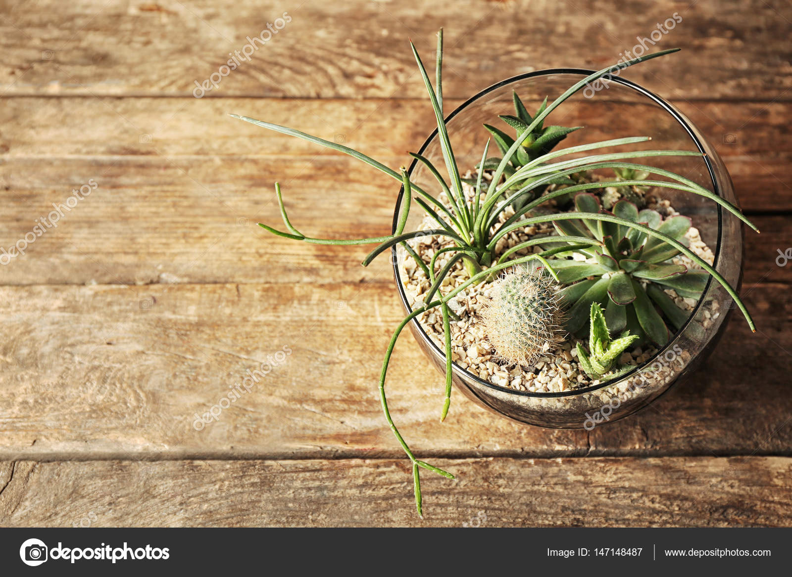 composition de plantes grasses en pot de verre — photographie