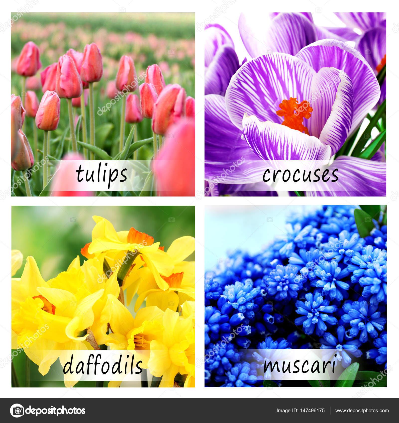 Collage Of Beautiful Flowers Stock Photo Belchonock 147496175