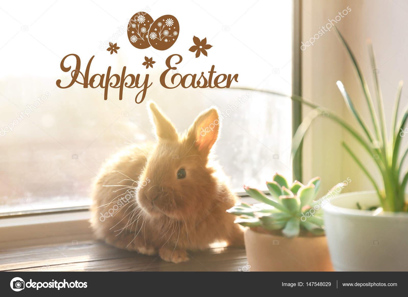 Süße Lustige Kaninchen In Der Nähe Von Fenster Und Text Frohe Ostern