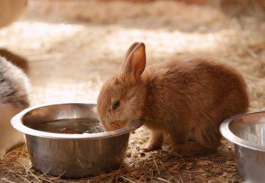 Cute funny rabbits