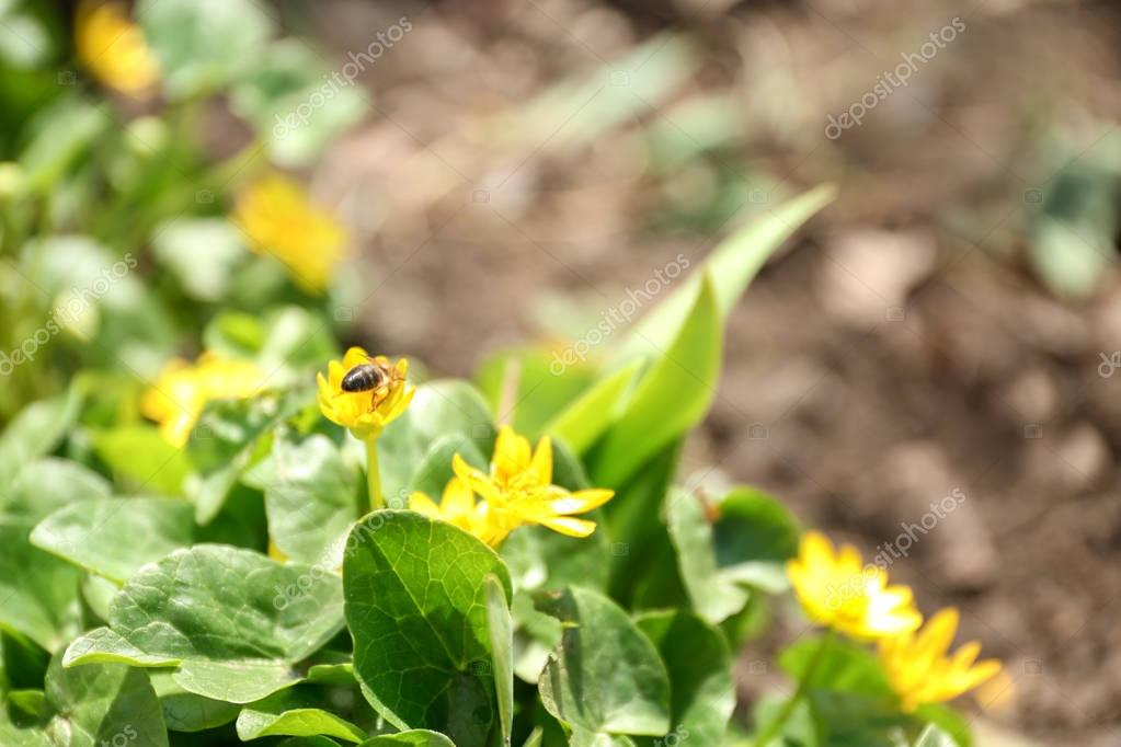Beautiful yellow flowers on flowerbed