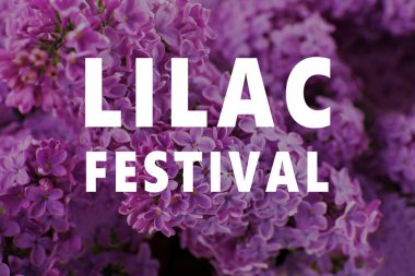 Text LILAC FESTIVAL
