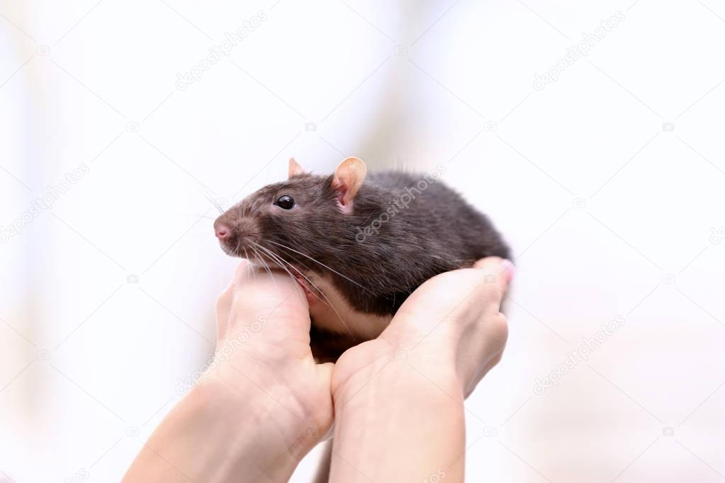 Hands of woman with cute rat