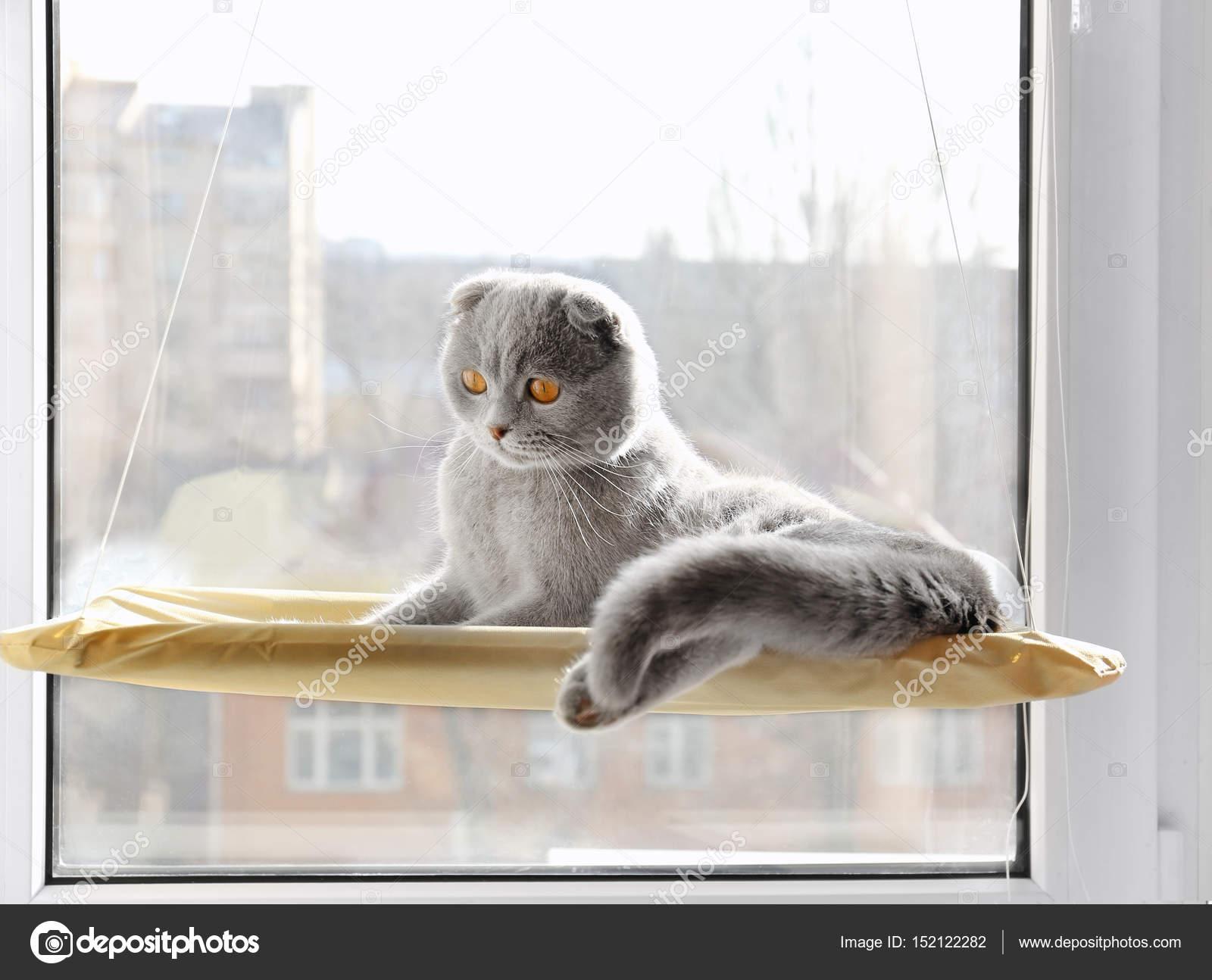 64627e9d8373 Χαριτωμένο γάτα περίεργος αναπαύεται στο παράθυρο μονταριστεί γάτα κρεβάτι  στο σπίτι — Εικόνα από ...