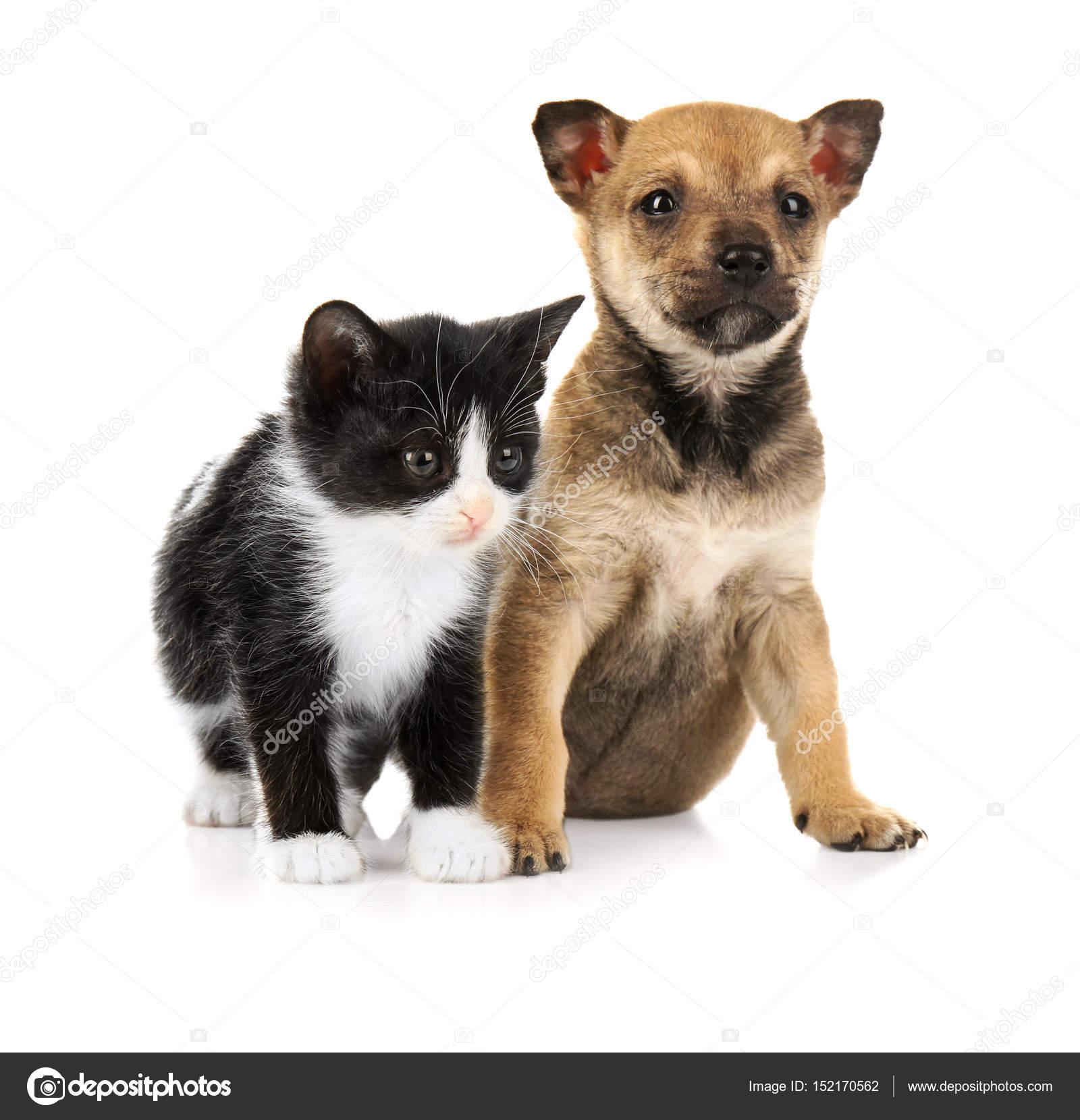Милые котенок и щенок — Стоковое фото © belchonock #152170562