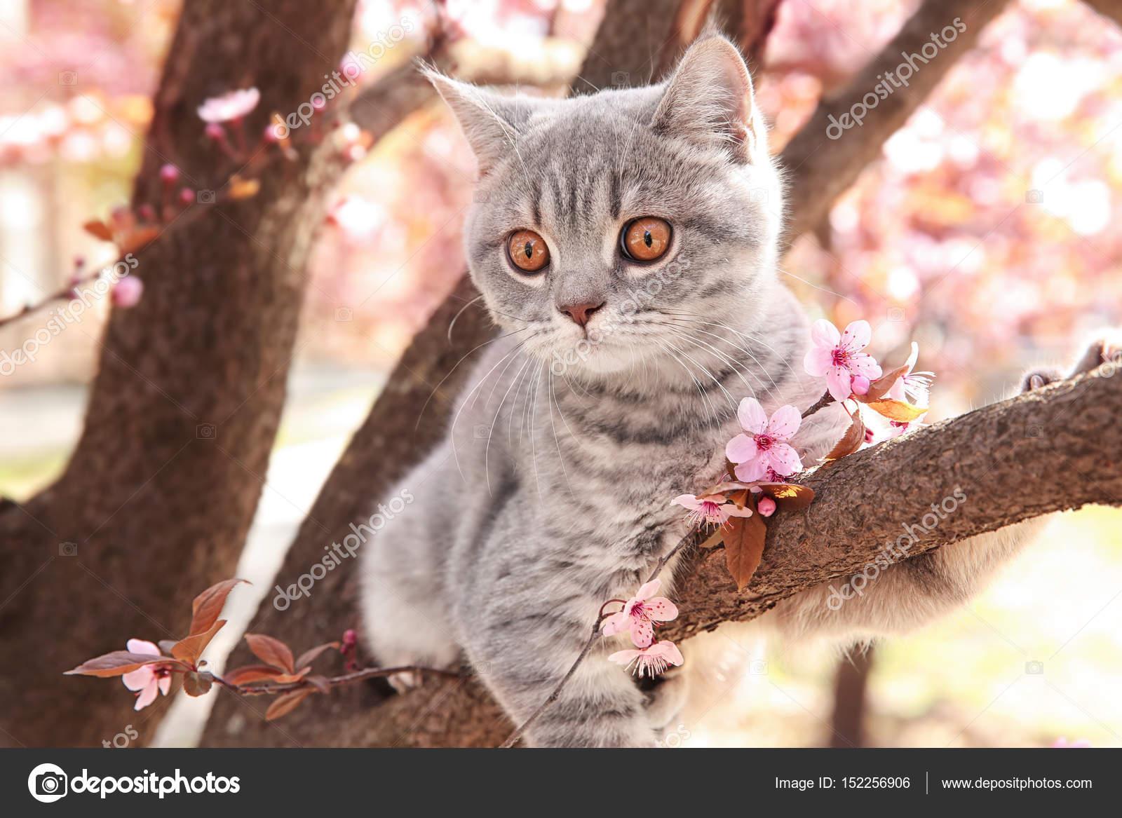 Image Chat Mignon chat mignon sur arbre fleuri — photographie belchonock © #152256906