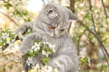 Cute cat on blossoming tree