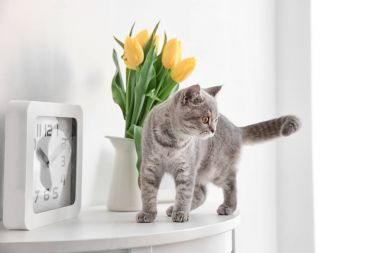 Cute cat and jug with flowers
