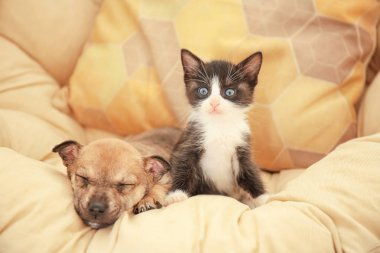 Cute little kitten and puppy