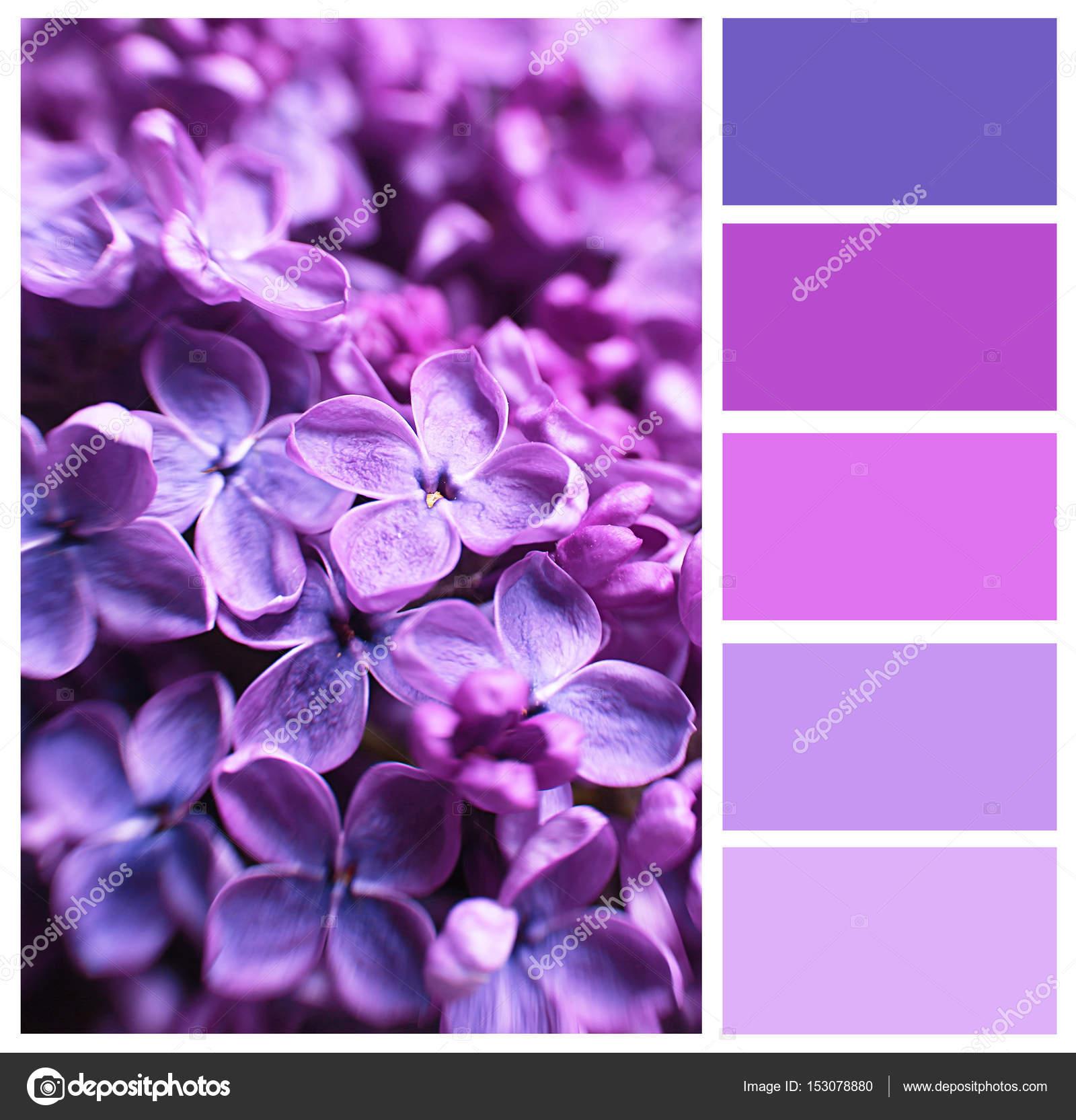 lila farbe passende und sch ne blumen stockfoto belchonock 153078880. Black Bedroom Furniture Sets. Home Design Ideas