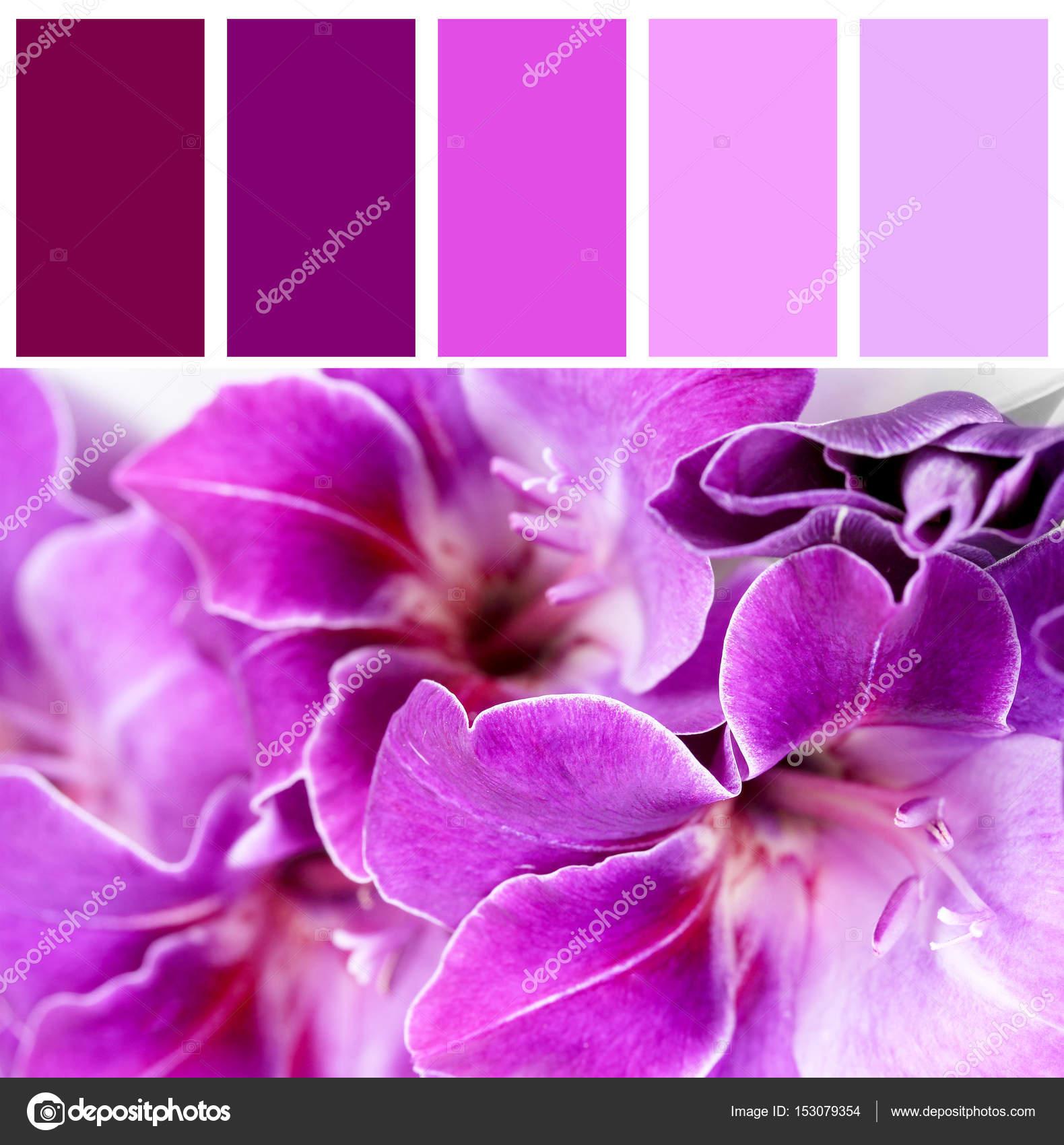 fiori di corrispondenza e bellissimo colore lilla foto stock belchonock 153079354. Black Bedroom Furniture Sets. Home Design Ideas