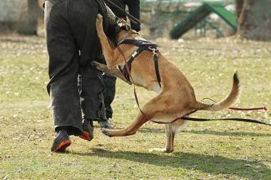 Açık havada çalışan köpek eğitim