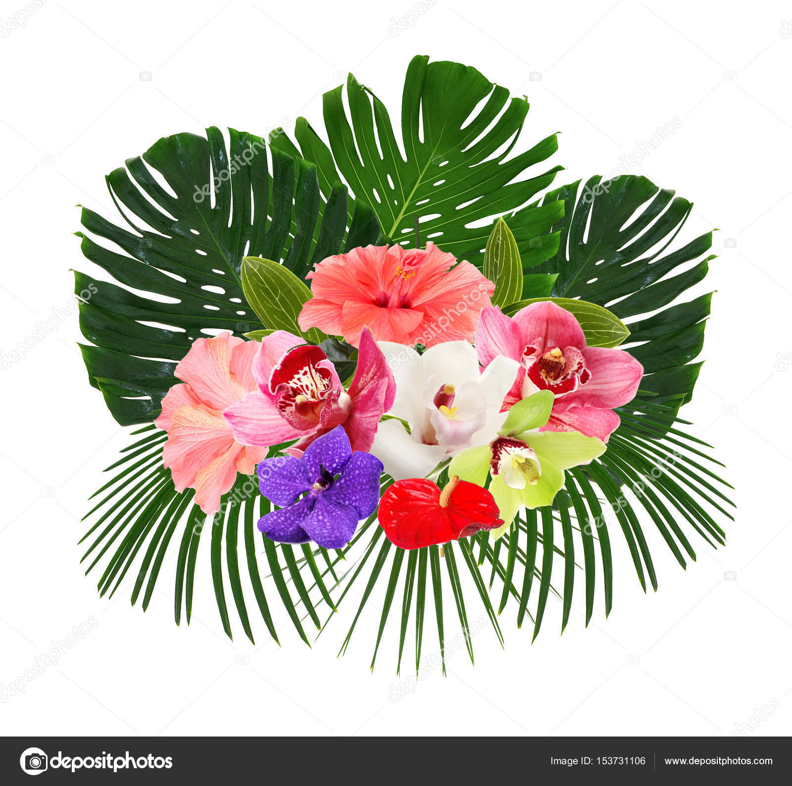 Tropical leaves and beautiful flowers stock photo belchonock composition of tropical leaves and beautiful flowers on white background photo by belchonock izmirmasajfo