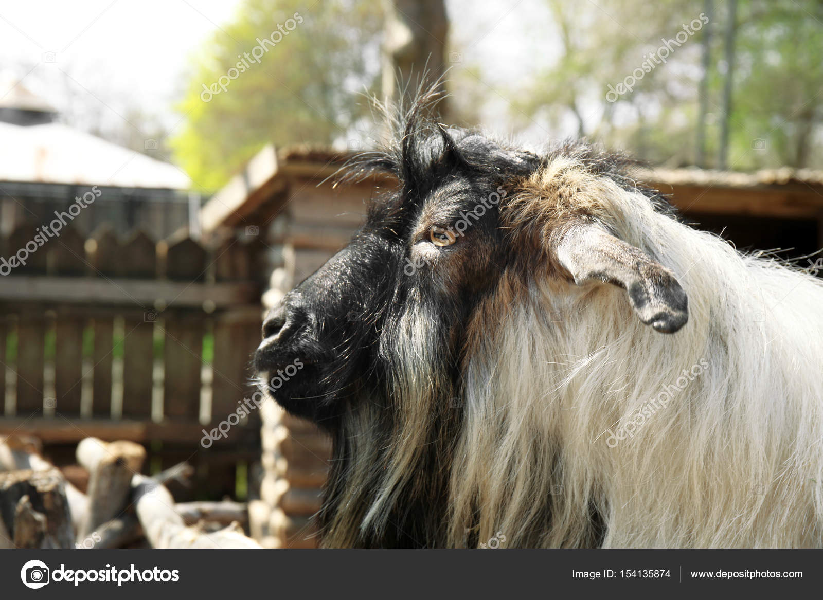 Cute funny goat in zoological garden, closeup — Photo by ...