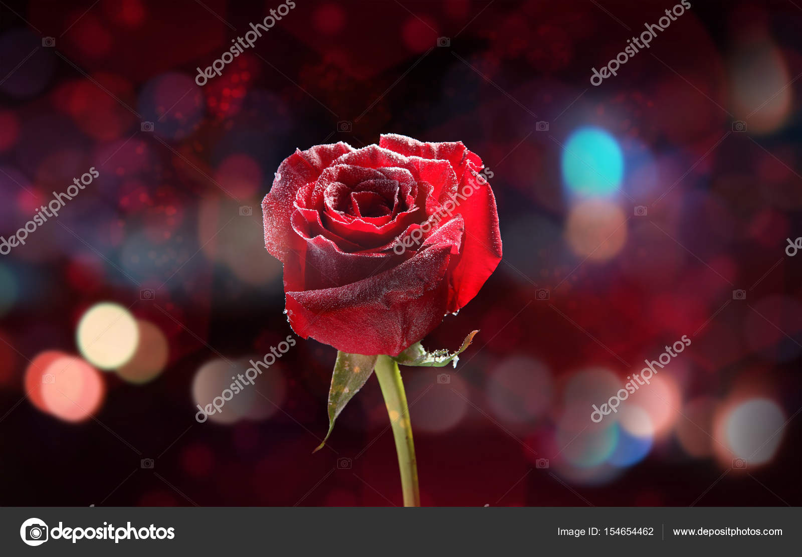 Beautiful Flower And Bokeh Effect Stock Photo Belchonock 154654462