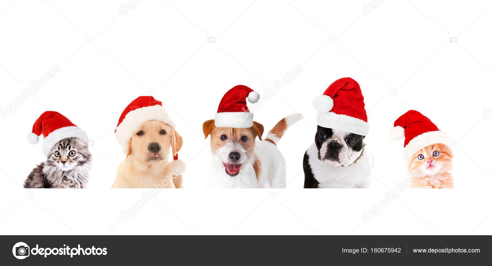 a6c61cbc354da Funny pets in Santa hats — Stock Photo © belchonock  160675942