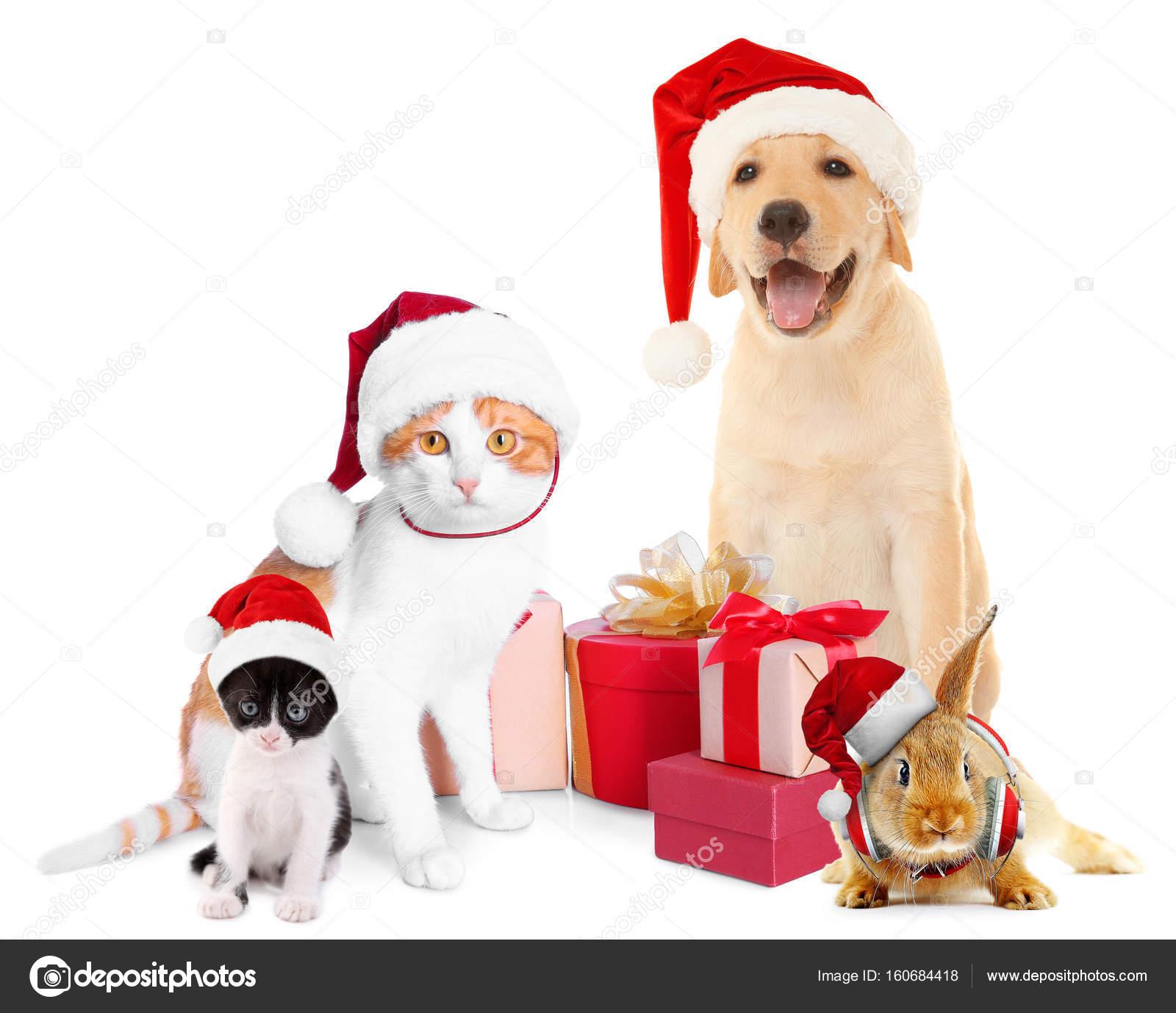 6ae9d7ba5b9dc Funny pets in Santa hats — Stock Photo © belchonock  160684418