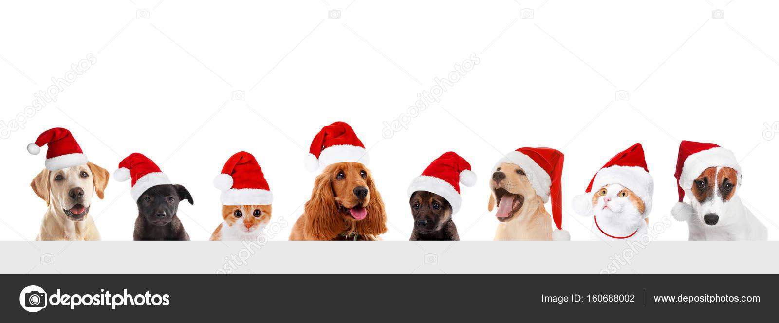 238b696515490 Funny pets in Santa hats — Stock Photo © belchonock  160688002