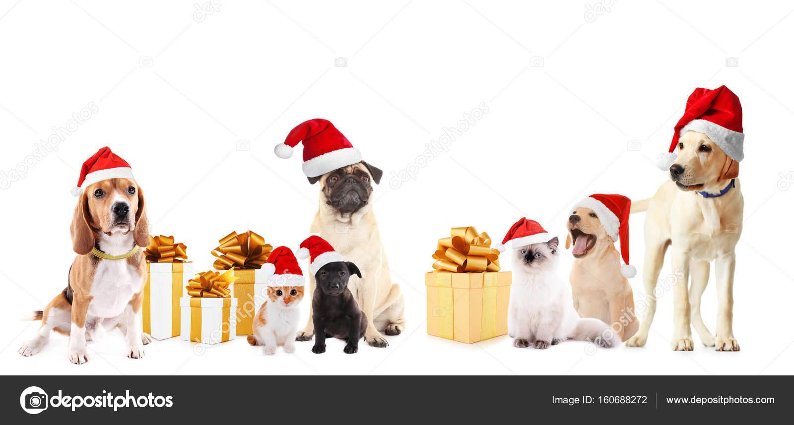 890aa3fa00e8a Funny pets in Santa hats — Stock Photo © belchonock  160688272