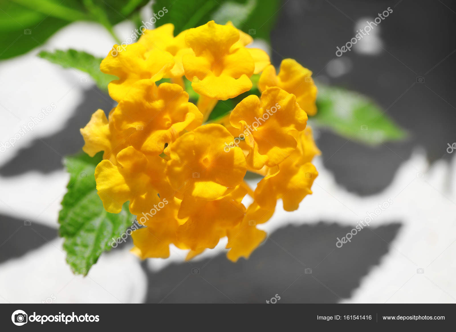 Exotic Tropical Flowers Stock Photo Belchonock 161541416
