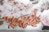 friss garnélarák jégen