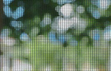 Green Mosquito screen