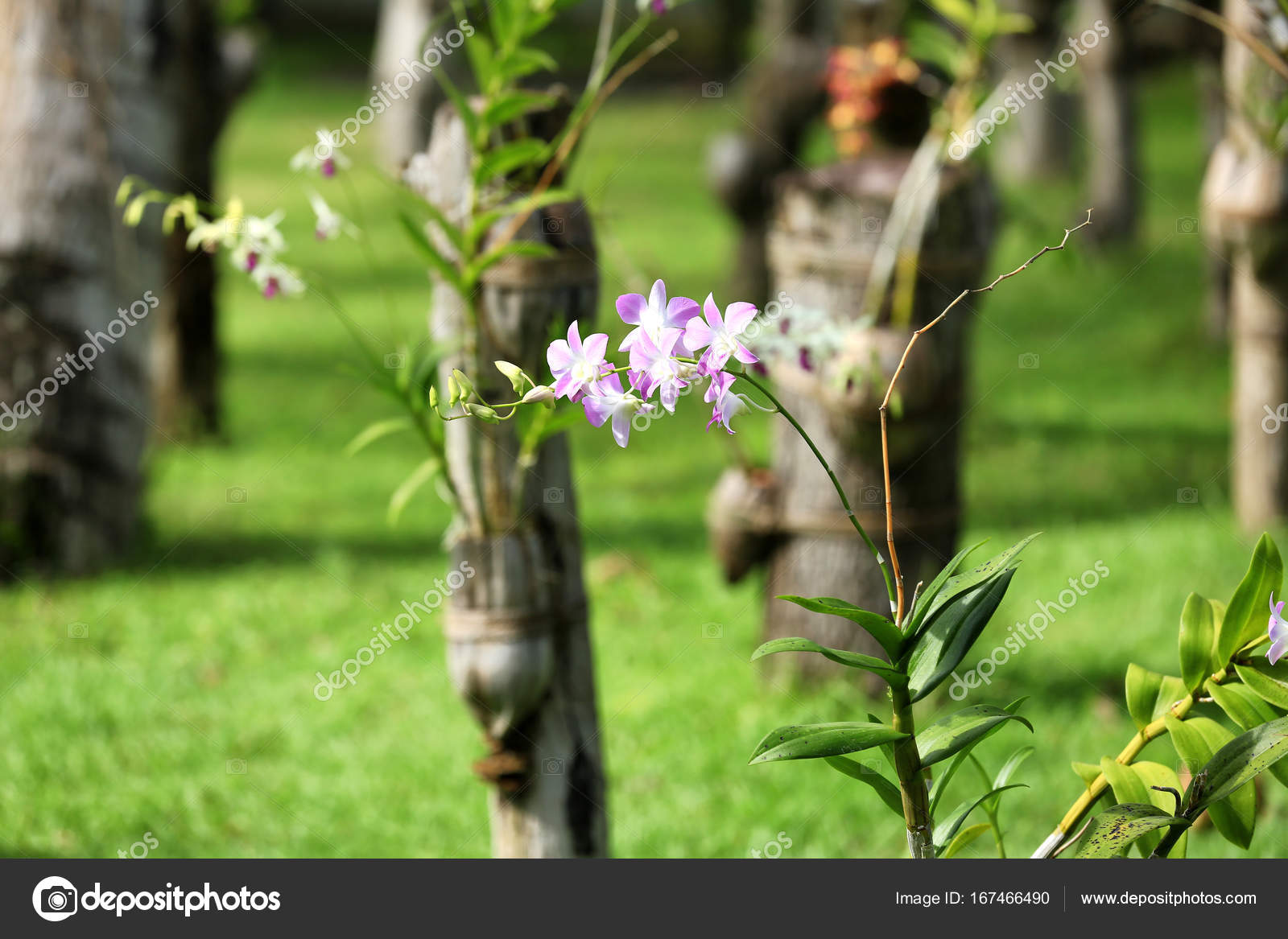 Belles fleurs dans le jardin photographie belchonock for Fleurs dans le jardin