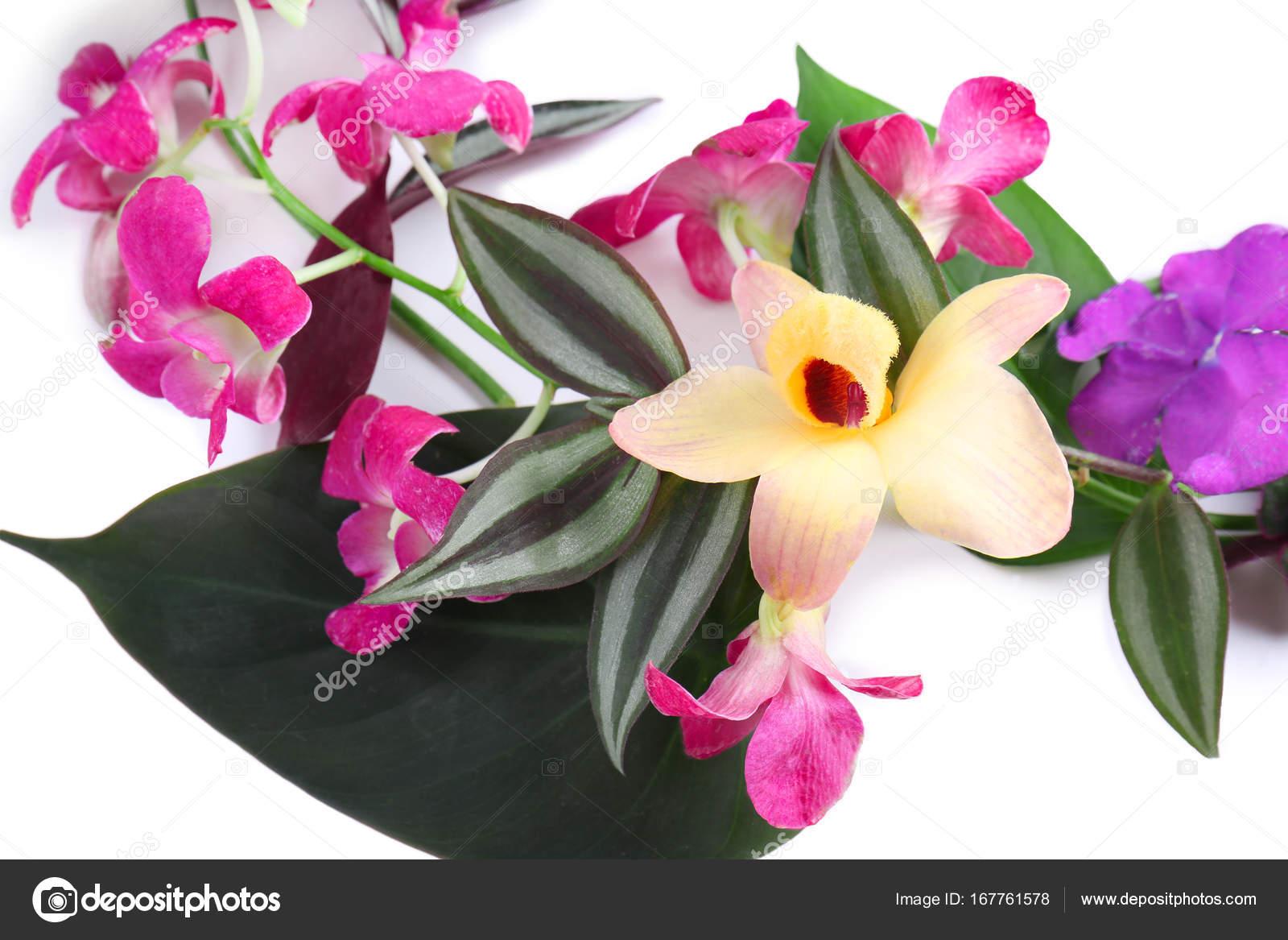 Beautiful tropical flowers stock photo belchonock 167761578 beautiful tropical flowers stock photo izmirmasajfo