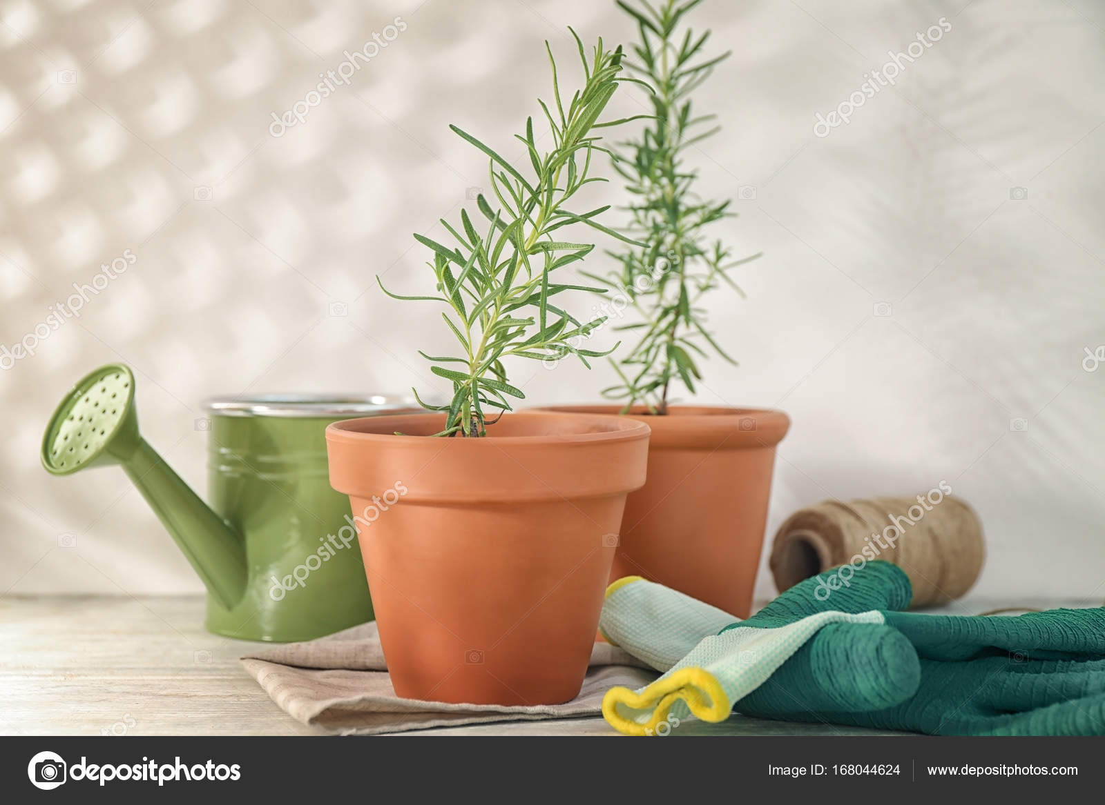 Rosmarin Pflanze Im Topf Stockfoto Belchonock 168044624