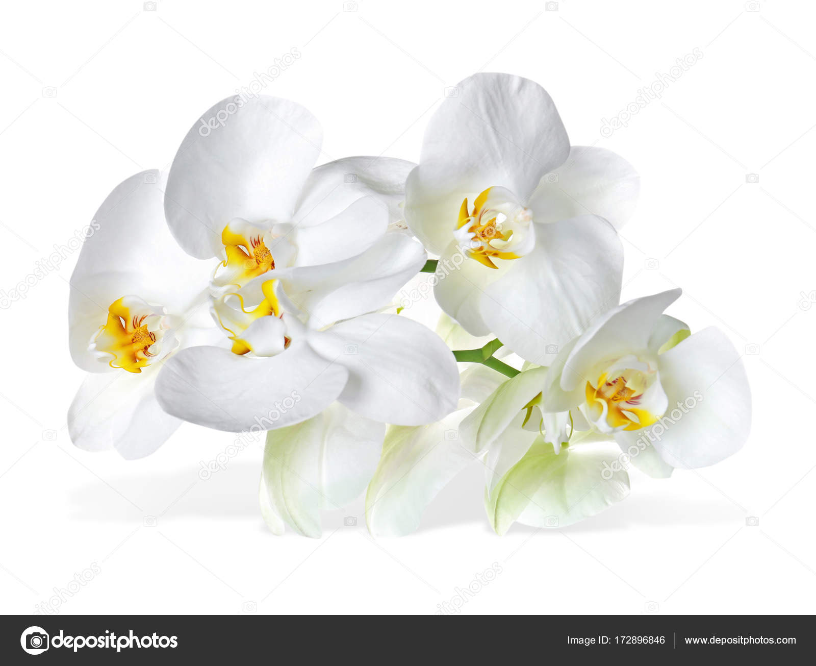 Beautiful Tropical Flowers On White Background Stock Photo