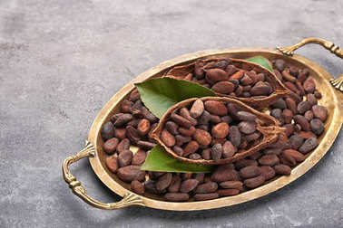 Tray with ripe cocoa beans on grey background
