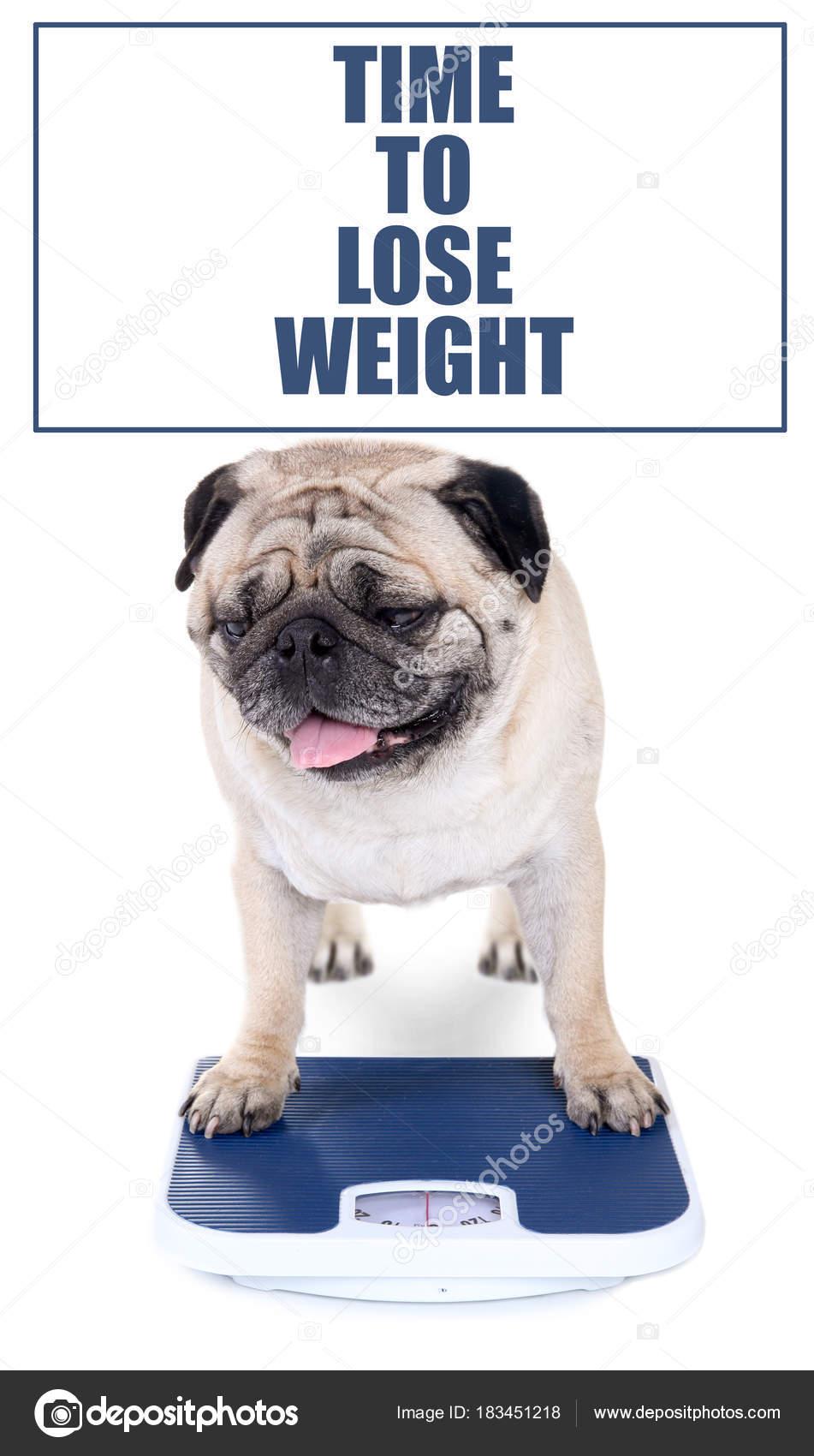 Bajar de peso a un perro