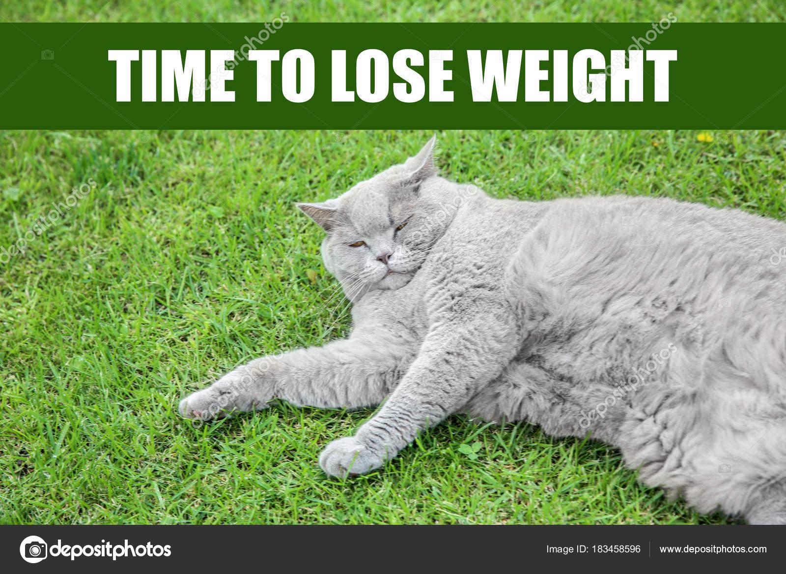 Perder peso gato como