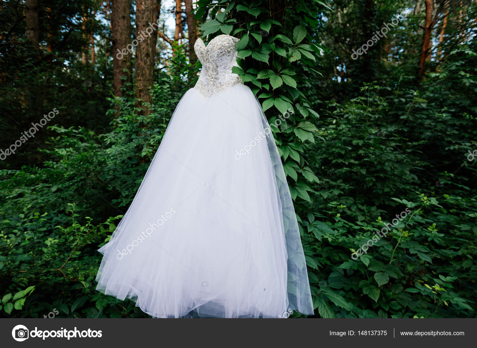 Tree With Ivy In The Forest White Wedding Dress Hanging On Stock Photo