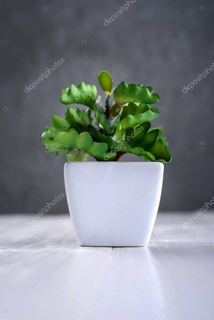 plante verte d int rieur dans un pot blanc photographie d duda 149626128. Black Bedroom Furniture Sets. Home Design Ideas