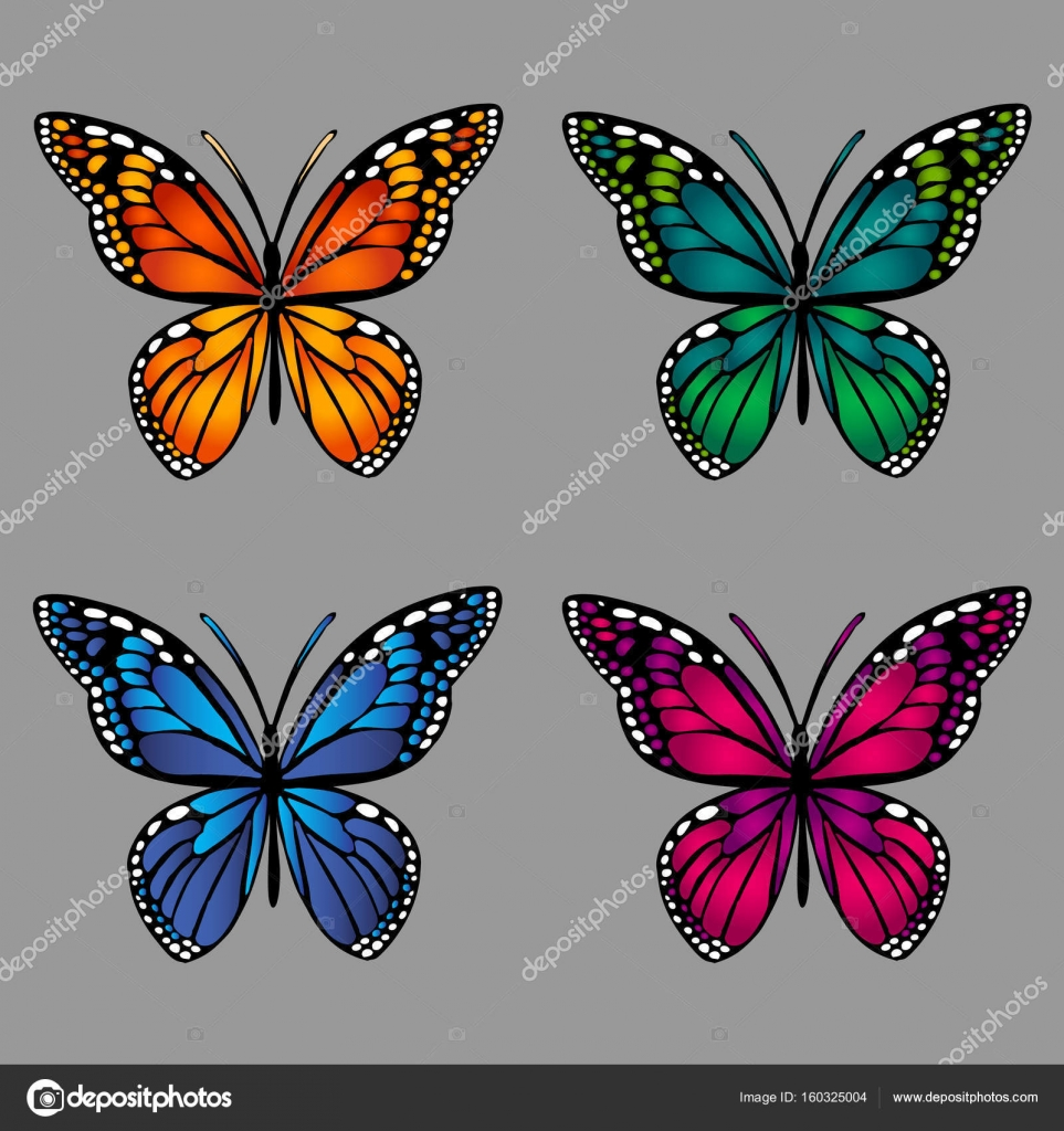 colorful butterflies on gray background — Stock Vector ...