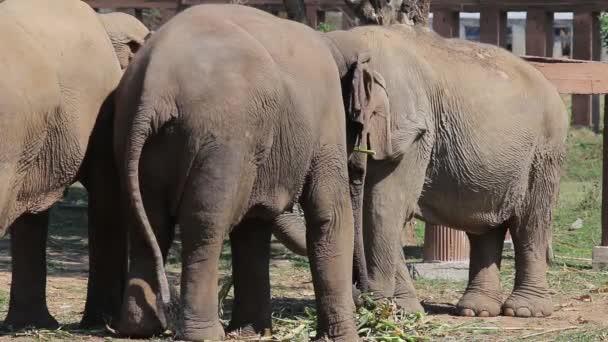 Sloni v Thajsku jíst rostliny.