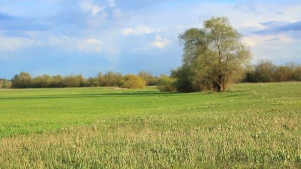 Vidéki tavaszi táj.