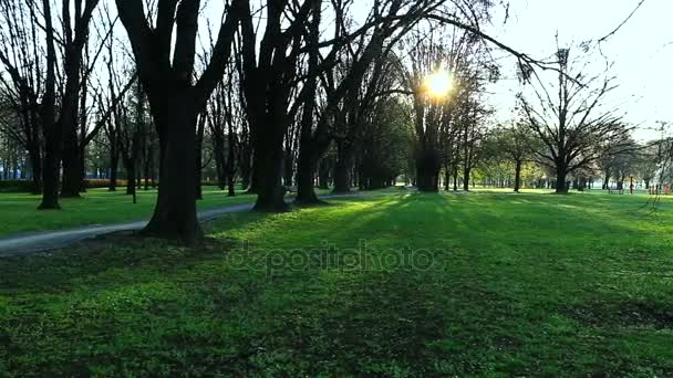Ráno v parku.