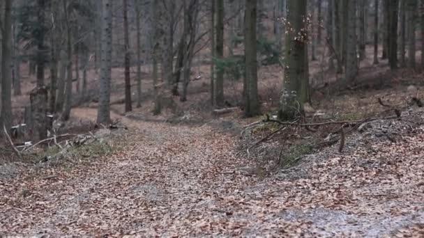 Bella foresta in montagne di Bieszczady