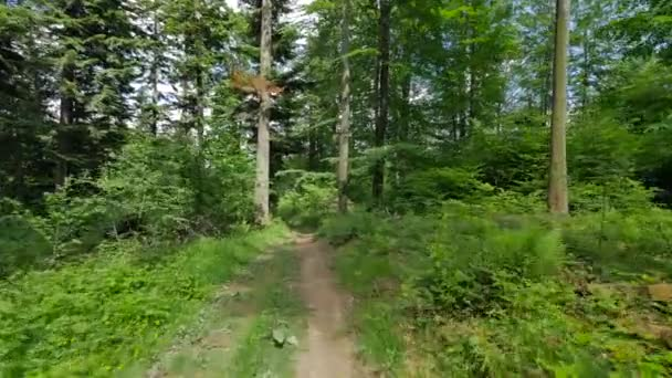 Flycam záběr cesty v lese.
