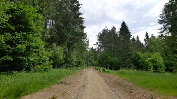 Chůze po lese v Polsku.